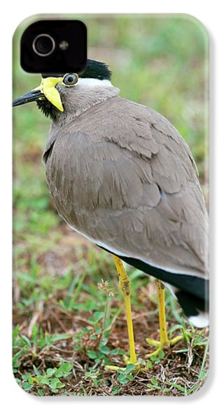 Yellow Wattled Lapwing IPhone 4 Case by Tony Camacho