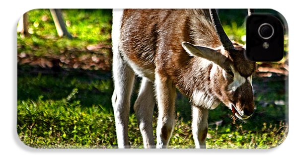 Youngster Addax IPhone 4 Case by Miroslava Jurcik