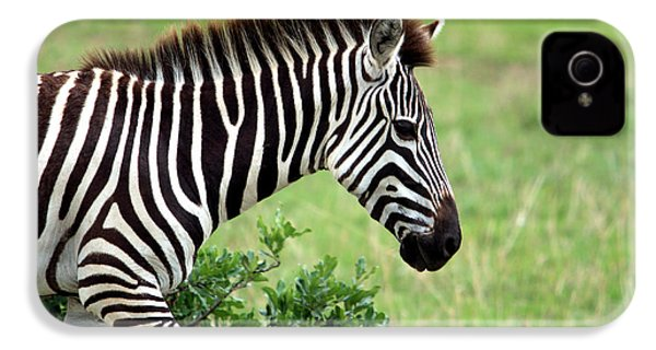 Zebra IPhone 4 Case by Aidan Moran