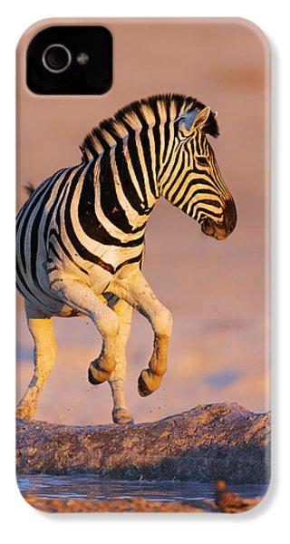 Zebras Jump From Waterhole IPhone 4 / 4s Case by Johan Swanepoel