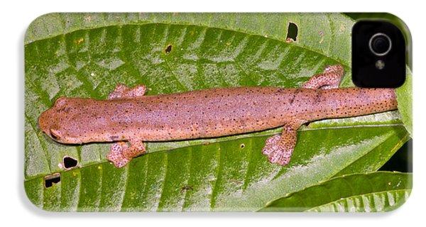 Bolitoglossine Salamander IPhone 4 Case by Dante Fenolio