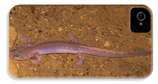 Ozark Blind Cave Salamander IPhone 4 Case by Dante Fenolio