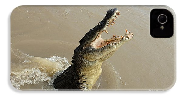 Salt Water Crocodile 2 IPhone 4 Case by Bob Christopher