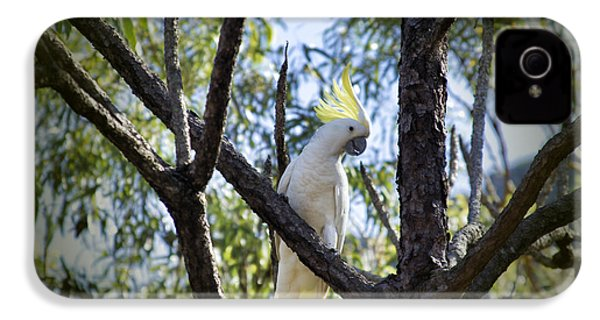 Sulphur Crested Cockatoo IPhone 4 / 4s Case by Douglas Barnard