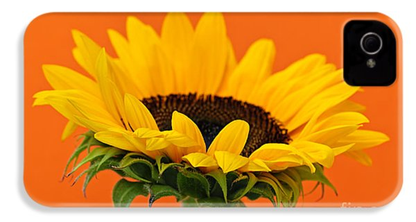 Sunflower Closeup IPhone 4 Case by Elena Elisseeva