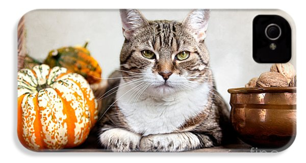 Cat And Pumpkins IPhone 4 / 4s Case by Nailia Schwarz