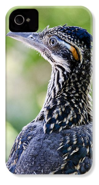 Greater Roadrunner  IPhone 4 / 4s Case by Saija  Lehtonen