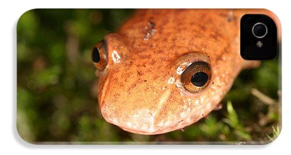 Spring Salamander IPhone 4 / 4s Case by Ted Kinsman