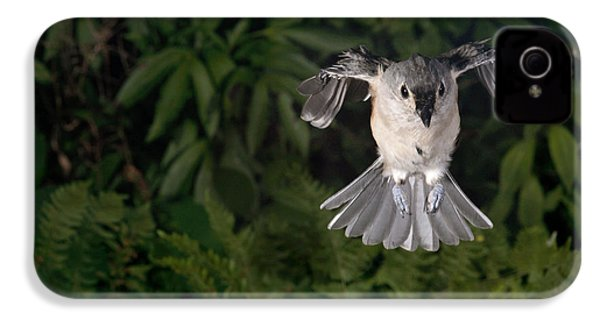 Tufted Titmouse In Flight IPhone 4 Case by Ted Kinsman