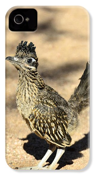 A Baby Roadrunner  IPhone 4 / 4s Case by Saija  Lehtonen