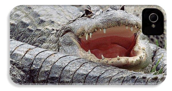 American Alligator Alligator IPhone 4 / 4s Case by Tim Fitzharris