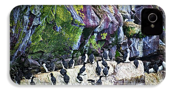 Birds At Cape St. Mary's Bird Sanctuary In Newfoundland IPhone 4 Case by Elena Elisseeva