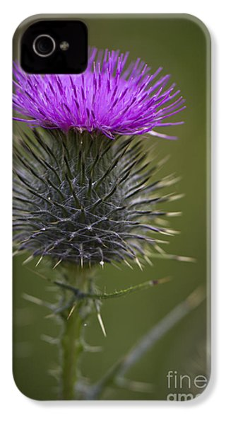 Blooming Thistle IPhone 4 Case