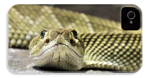 Crotalus Basiliscus IPhone 4 Case by JC Findley