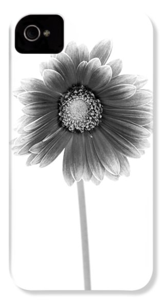 Gerbera In Black And White IPhone 4 / 4s Case by Sebastian Musial