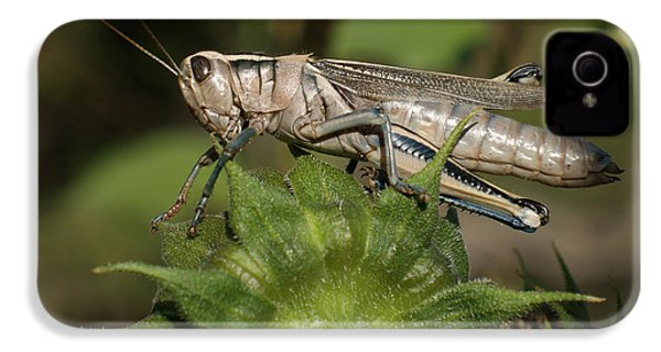Grasshopper IPhone 4 / 4s Case by Ernie Echols
