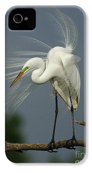 Great Egret IPhone 4 Case by Bob Christopher