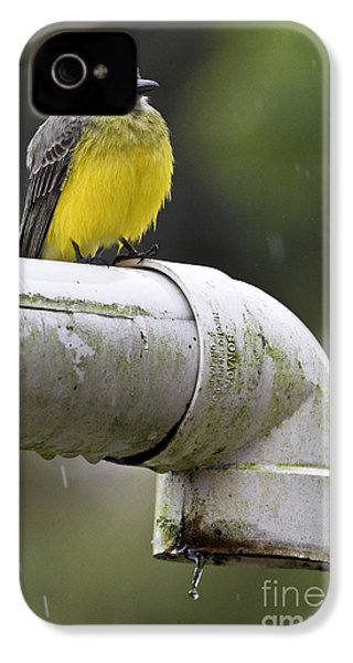 Grey-capped Flycatcher IPhone 4 Case by Heiko Koehrer-Wagner