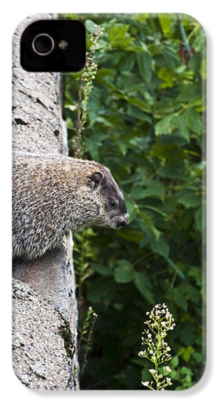 Groundhog Day IPhone 4 Case by Bill Cannon