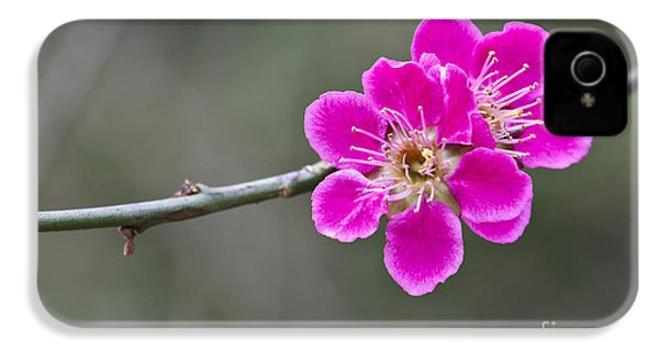 IPhone 4 Case featuring the photograph Japanese Flowering Apricot. by Clare Bambers