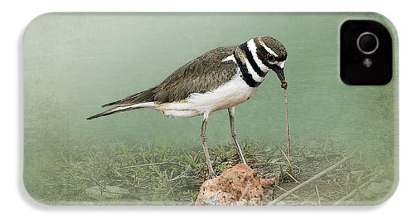 Killdeer And Worm IPhone 4 Case by Betty LaRue