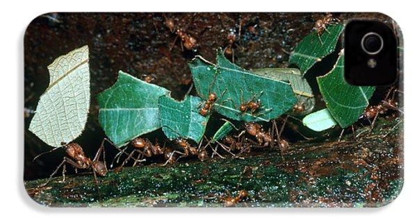 Leafcutter Ants IPhone 4 Case by Gregory G. Dimijian