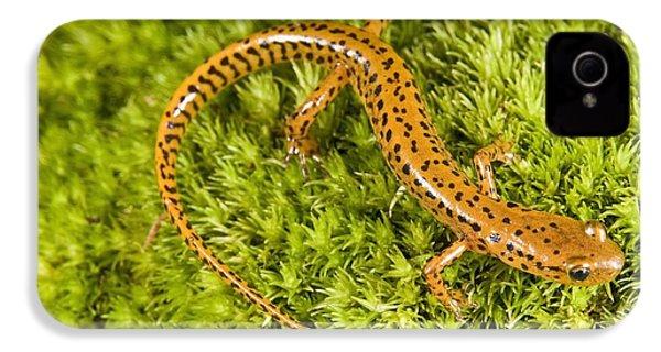 Longtail Salamander Eurycea Longicauda IPhone 4 / 4s Case by Jack Goldfarb