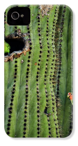Lovebirds And The Saguaro  IPhone 4 / 4s Case by Saija  Lehtonen