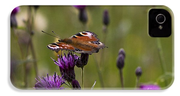 Peacock Butterfly On Knapweed IPhone 4 Case