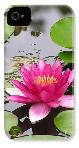 Pink Lily Flower  IPhone 4 Case by Diane Greco-Lesser