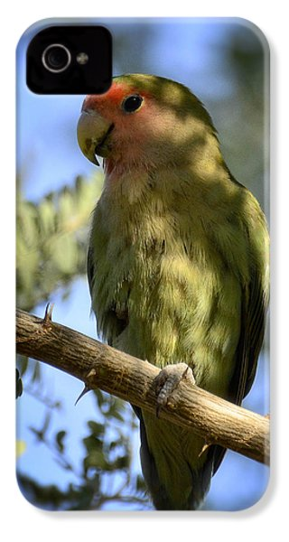 Pretty Bird IPhone 4 / 4s Case by Saija  Lehtonen