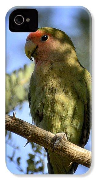 Pretty Bird IPhone 4 Case by Saija  Lehtonen
