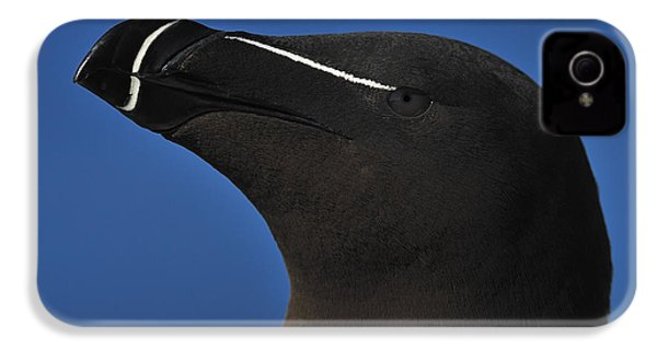 Razorbill Portrait IPhone 4 Case by Tony Beck