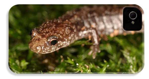 Red-backed Salamander IPhone 4 Case by Ted Kinsman