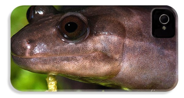 Red Hills Salamander IPhone 4 / 4s Case by Dant� Fenolio