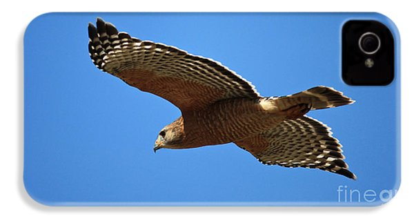 Red Shouldered Hawk In Flight IPhone 4 Case