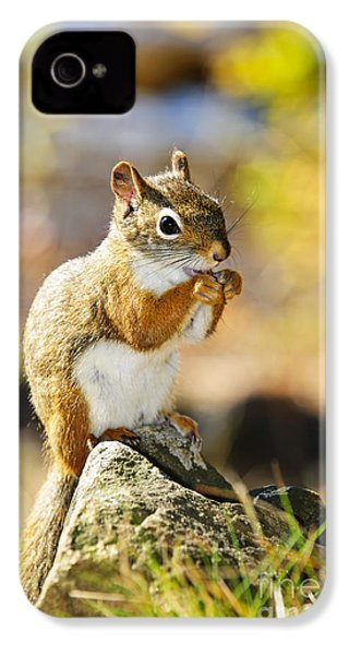 Red Squirrel IPhone 4 / 4s Case by Elena Elisseeva