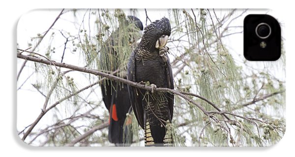 Red Tailed Black Cockatoos IPhone 4 / 4s Case by Douglas Barnard