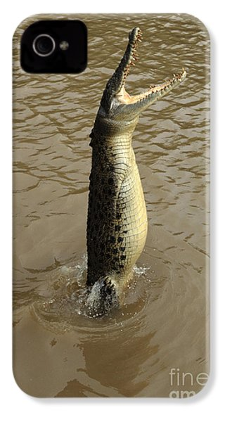 Salt Water Crocodile IPhone 4 Case by Bob Christopher