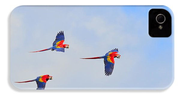 Scarlet Macaws IPhone 4 Case by Tony Beck
