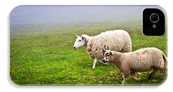 Sheep In Misty Meadow IPhone 4 Case by Elena Elisseeva