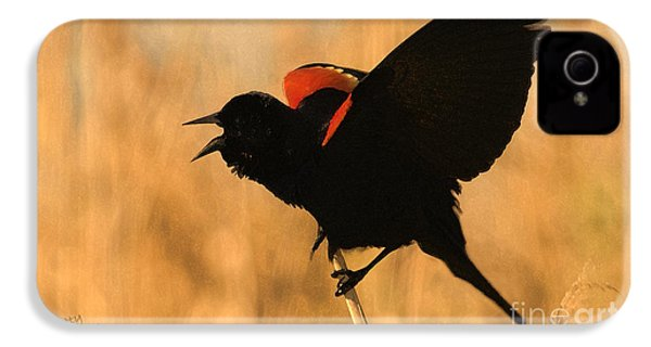Singing At Sunset IPhone 4 / 4s Case by Betty LaRue