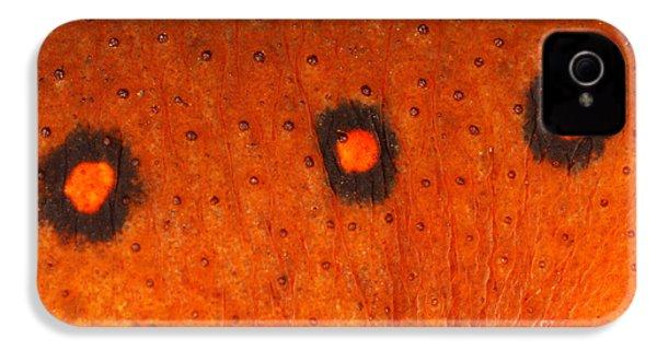 Skin Of Eastern Newt IPhone 4 Case