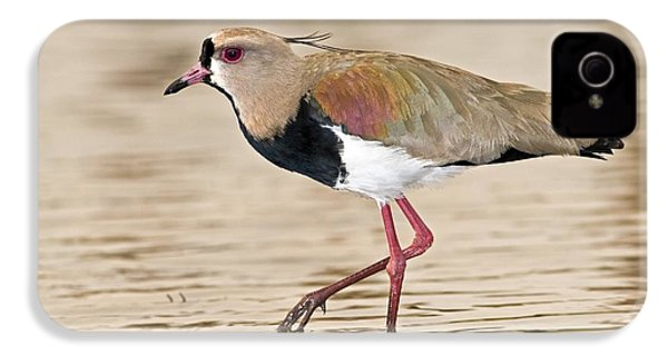 Southern Lapwing IPhone 4 Case by Tony Camacho