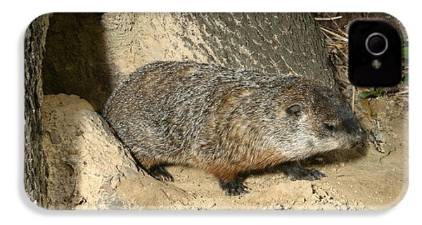 Woodchuck IPhone 4 / 4s Case by Ted Kinsman