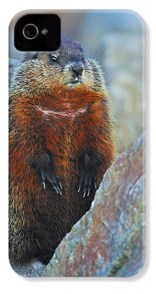Woodchuck IPhone 4 Case by Tony Beck
