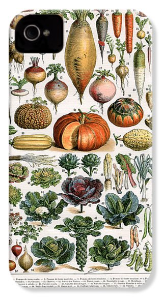 Illustration Of Vegetable Varieties IPhone 4 Case