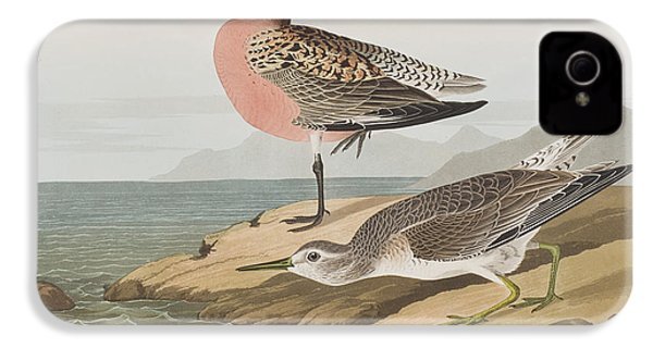 Red-breasted Sandpiper  IPhone 4 Case by John James Audubon
