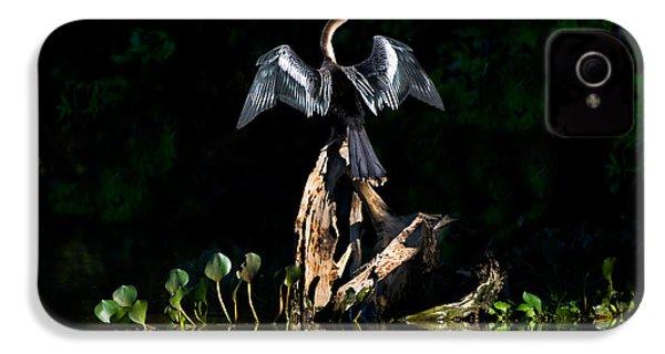 Anhinga Anhinga Anhinga, Pantanal IPhone 4 Case by Panoramic Images