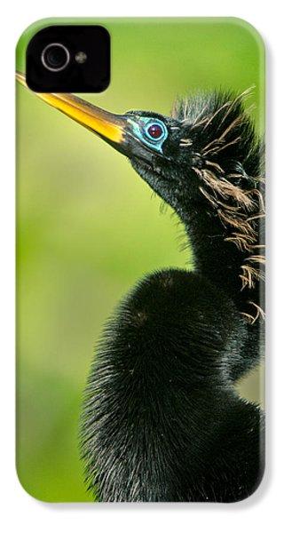 Anhinga Anhinga Anhinga, Tortuguero IPhone 4 Case by Panoramic Images